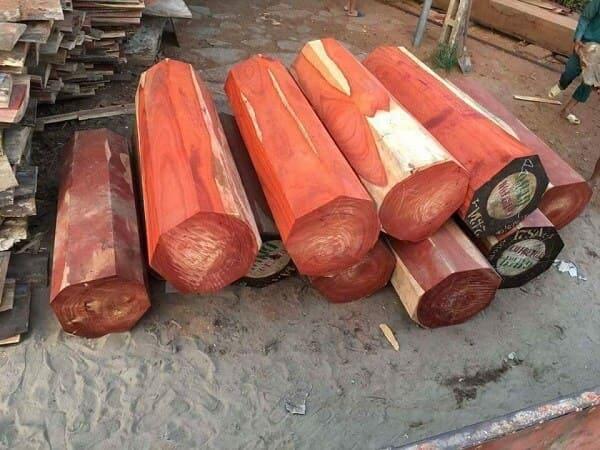 Gỗ hương lào và gỗ hương nam phi