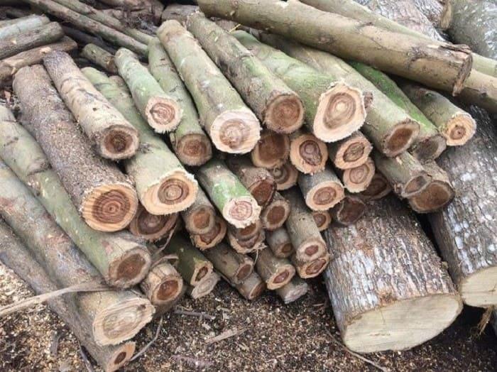Gỗ keo là gỗ gì