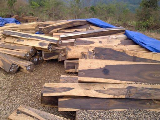 Gỗ trắc là gỗ gì? Có tốt không?