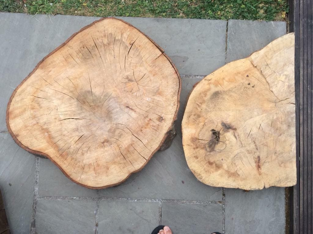 Đặc điểm nổi bật của gỗ beech