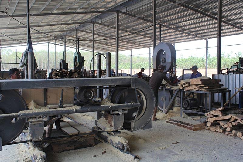Quy trình sản xuất gỗ cao su xẻ sấy