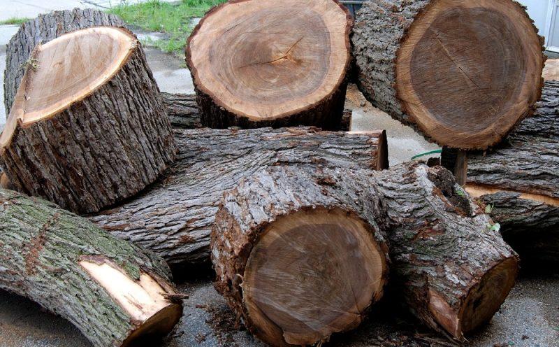 Danh sách gỗ nhóm 1