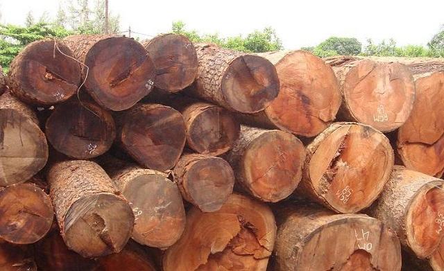 Gỗ gõ đỏ thuộc nhóm gỗ quý