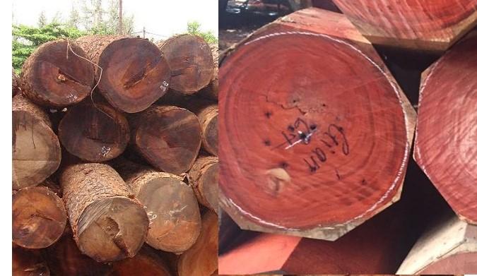 Gỗ gõ đỏ và gỗ hương