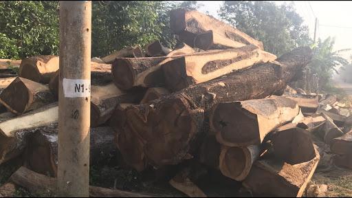Gỗ Muồng là gỗ gì?