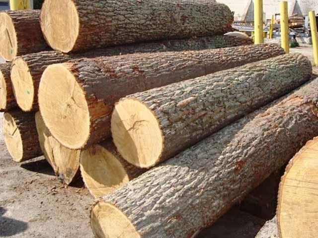 Ưu nhược điểm của gỗ chò chỉ